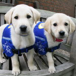 Epilepsy Support Dogs